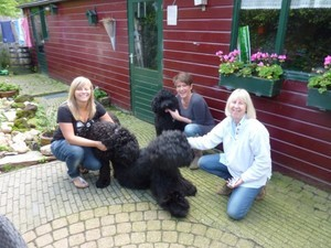 Labradoodle grooming workshop